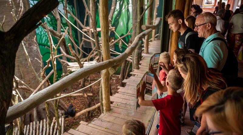 Bonoboverblijf in ZOO Planckendael is nu het grootste ter wereld