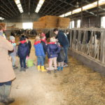 Provincie Antwerpen verlaagt de drempel boerderijbezoeken met een mooie nieuwe en makkelijk bruikbare website